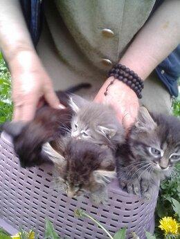 Кошки - Отдам котят в хорошие руки, 0