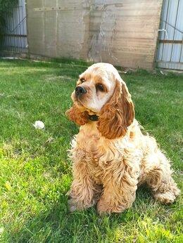 Собаки - Радостный щенок 🐶, 0