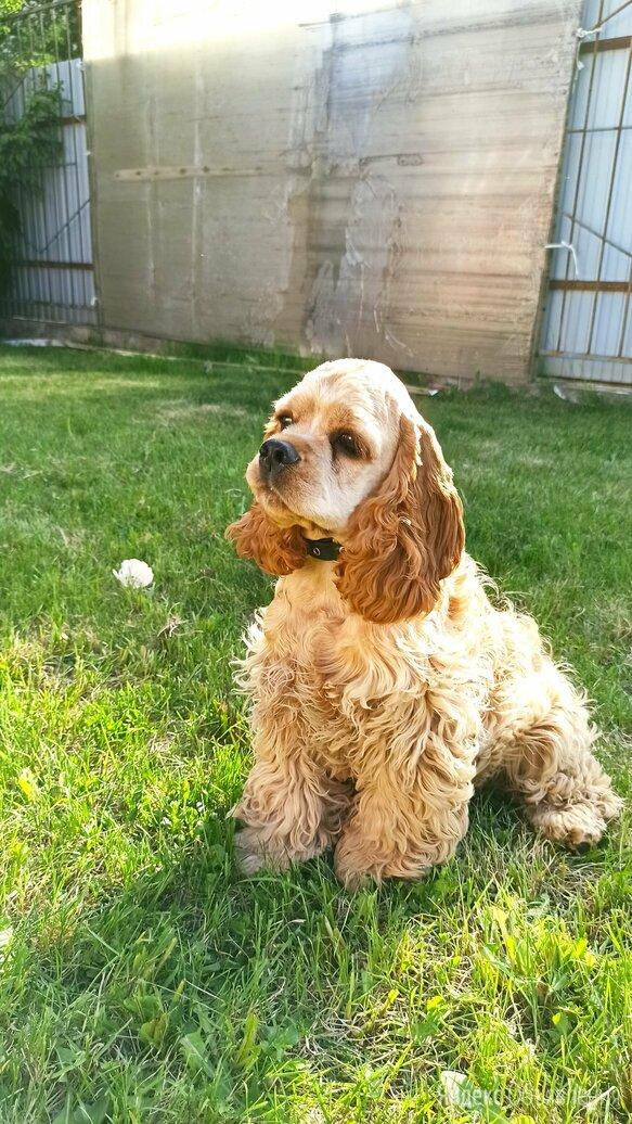 Радостный щенок 🐶 по цене 30000₽ - Собаки, фото 0