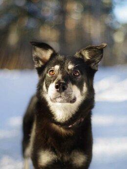 Собаки - Стешенька в поисках дома, 0