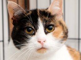 Кошки - Робкая кошка Орхидея, которую пытались застрелить, 0