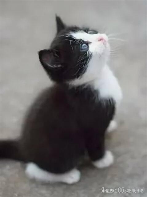 Котёнок девочка от домашней кошки по цене даром - Кошки, фото 0