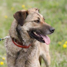 Собаки - Верная собака в поисках дома, 0