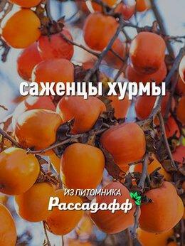 Рассада, саженцы, кустарники, деревья - Саженцы хурмы, 0