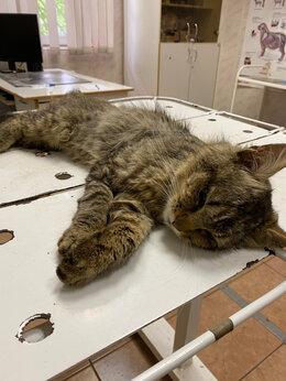 Животные - Найден кот, 0