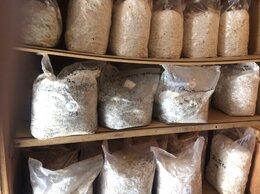 Семена - Мицелий грибов вешенки, шампиньонов, 0