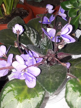 Комнатные растения - растение комнатное, 0