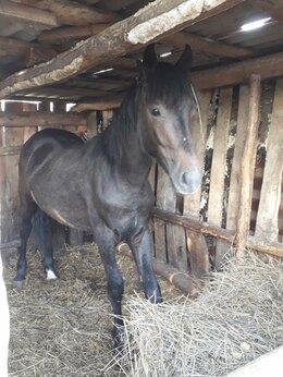 Лошади - Лошадь, 0