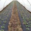 Укрывной материал Агроспан по цене не указана - Укрывной материал и пленка, фото 2