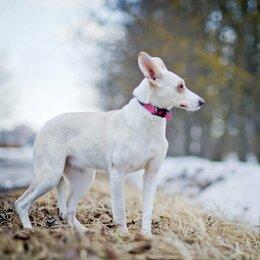 Собаки - Бэлла и её замечательные уши ищет дом.…, 0
