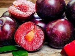 Рассада, саженцы, кустарники, деревья - Саженцы морозостойкого гибрида персика, абрикоса…, 0