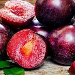 Рассада, саженцы, кустарники, деревья - Саженцы морозостойкого гибрида персика, абрикоса и сливы  - шарафуга, плумкот, 0