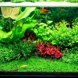 Бытовые услуги - Чистка аквариумов, 0