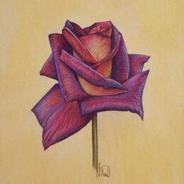 Картины, постеры, гобелены, панно - Роза. Пастель,цветок, картина,рисунок, 0