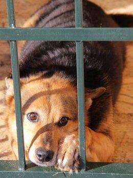 Животные - Потерявшая семью собака в добрые руки, 0