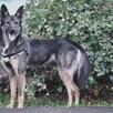 Небольшая собачка ищет дом  по цене даром - Собаки, фото 3