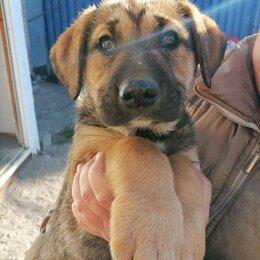 Собаки - Щенок девочка 7,5 месяца, 0