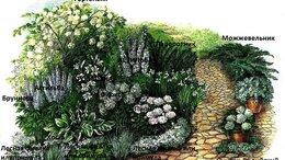 Рассада, саженцы, кустарники, деревья - Белый цветник N 55-многолетние цветы, 0