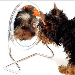 Груминг и уход - Стрижка собак 🐕 и кошек 🐈 , 0