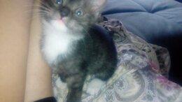 Кошки - Котёнок мальчик 1 месяц, 0