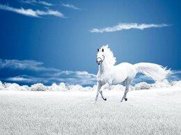 Лошади - Конь, 0