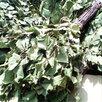 березовые веники для бани по цене не указана - Аксессуары, фото 1