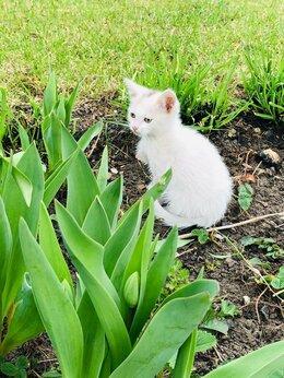 Кошки - Белоснежные девчушки, 0