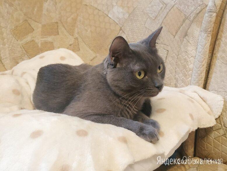 Отдам кошку в добрые руки по цене 100₽ - Кошки, фото 0