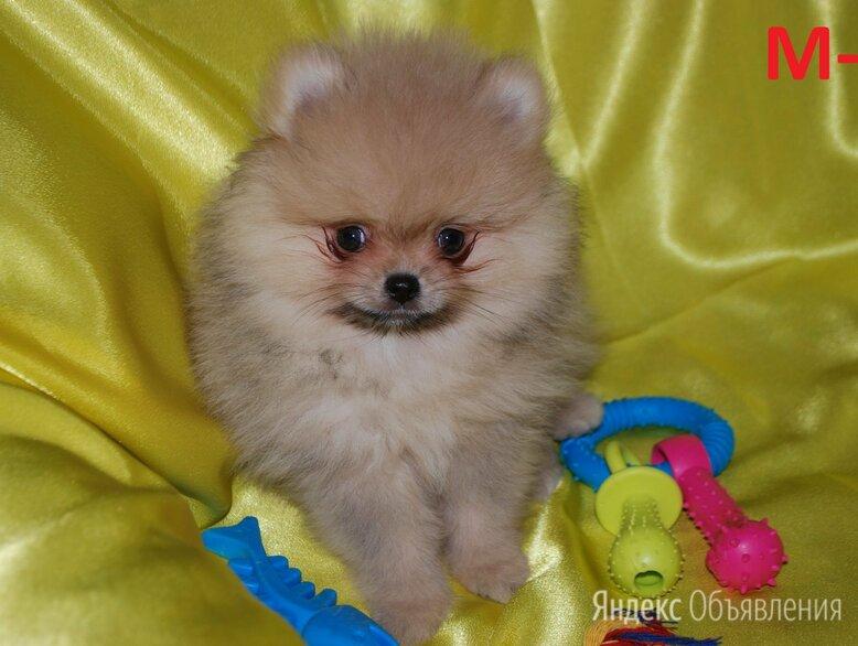 Детки померанский шпицов по цене 30000₽ - Собаки, фото 0