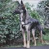 Небольшая собачка ищет дом  по цене даром - Собаки, фото 6