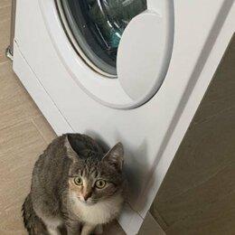 Кошки - Кошка с приданым, 0