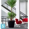 Напольное кашпо Lechuza Classico, черное 35-d, 33-h по цене 5790₽ - Горшки, подставки для цветов, фото 3