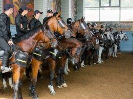 Полицейские - Полицейский - кавалерист, 0
