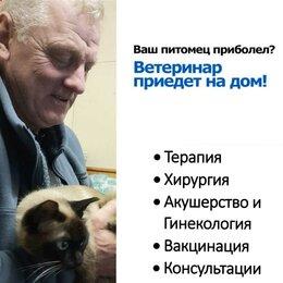 Груминг и уход - Вызов ветеринарного врача на дом, 0