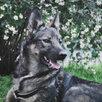 Небольшая собачка ищет дом  по цене даром - Собаки, фото 1