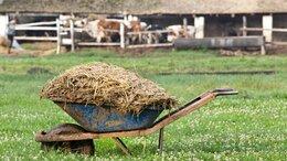 Удобрения - Коровий навоз в мешках по 60 литров и россыпью, 0