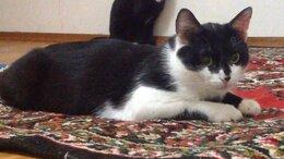 Кошки - Марсель ищет хозяев, 0