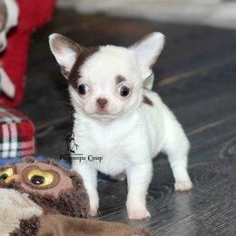 Собаки - Кукольная Чихуа с видео 3 мес,есть доставка, 0