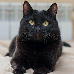 Кошки - Котик Космос, 0