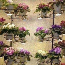 Комнатные растения - Фиалки с названием города и другие сорта, 0