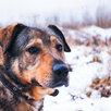 Мишутка ищет дом  по цене даром - Собаки, фото 0