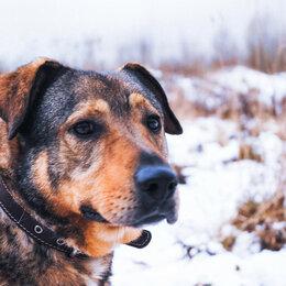 Собаки - Мишутка ищет дом , 0