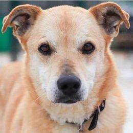 Собаки - Фанта 8 лет в приюте ждёт свою семью..., 0