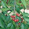Сетка от птиц на кусты по цене 700₽ - Отпугиватели и ловушки для птиц и грызунов, фото 2