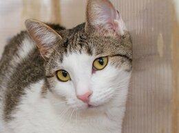 Кошки - Молодая кокетка, кошка Спаржа, 0