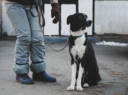 Собаки - Собака ищет дом , 0