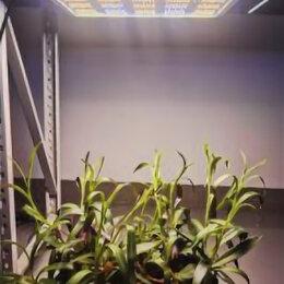 Аксессуары и средства для ухода за растениями - Фитолампа quantum board полный спектр 212 Вт, 0