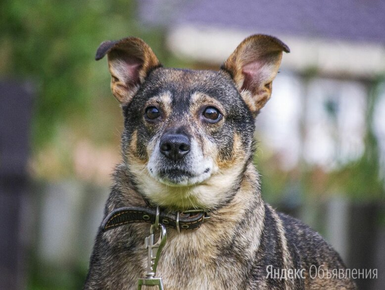 Валюшка по цене даром - Собаки, фото 0