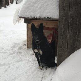 Собаки - Собака, добрая, веселая девочка, умер хозяин, 0
