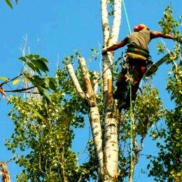 Бытовые услуги - Спил деревьев любой сложности,расчистка участка., 0